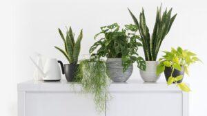 Low-Maintenance Houseplants